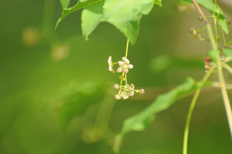 吊り花の花@信州_d0056382_23415551.jpg