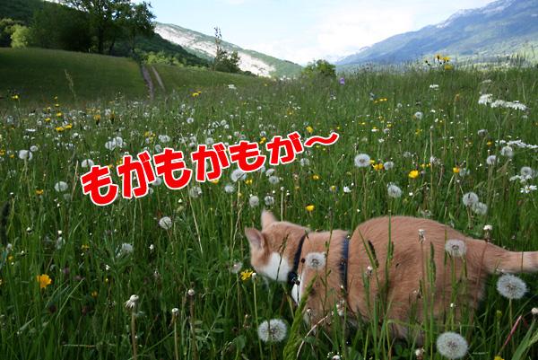 f0068385_6433289.jpg
