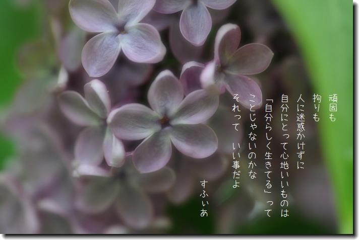 b0152416_8573293.jpg