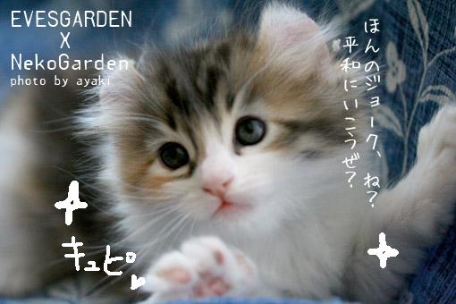 d0164118_17511066.jpg