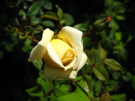 お花が気になるお年頃に・・・_b0168823_1821772.jpg
