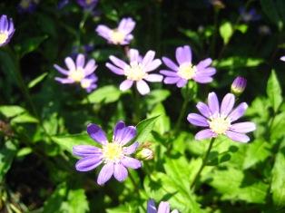お花が気になるお年頃に・・・_b0168823_18271870.jpg