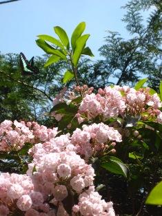 お花が気になるお年頃に・・・_b0168823_1835135.jpg