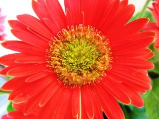お花が気になるお年頃に・・・_b0168823_18381842.jpg