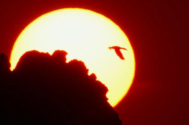 夕陽とウミウ_d0074828_22474560.jpg