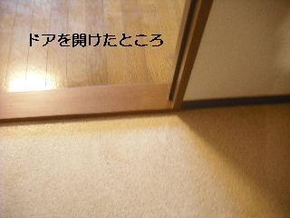 f0031037_2229441.jpg