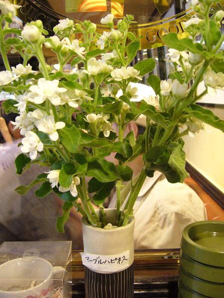 マーブルハピネスとベルクのあいだで #flower #cafe_c0069047_1395443.jpg
