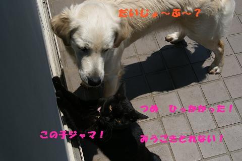 c0214455_21274532.jpg