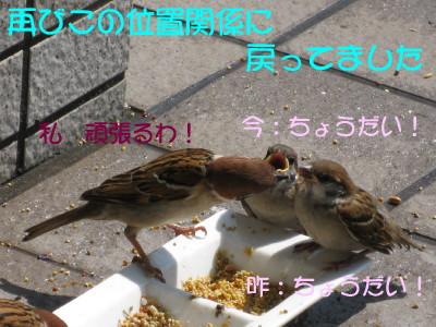 b0158061_1811313.jpg