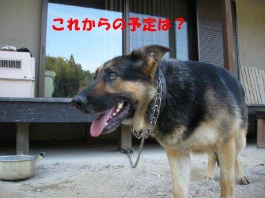 b0113663_938469.jpg