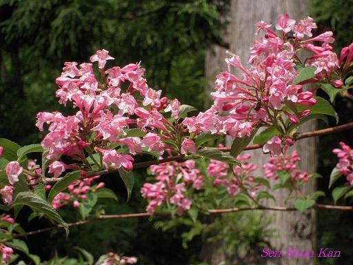 山で咲いていた花_a0164068_23245140.jpg