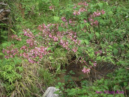 山で咲いていた花_a0164068_2325489.jpg
