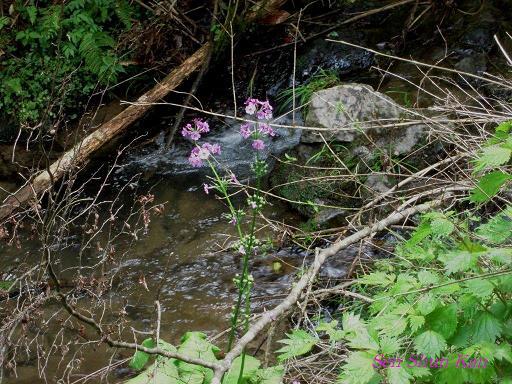 山で咲いていた花_a0164068_23293778.jpg