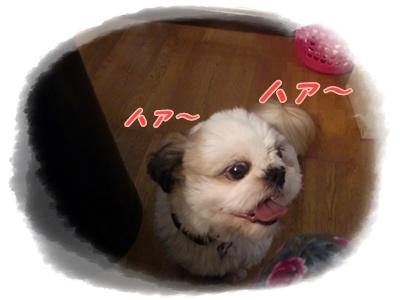 f0213476_1015292.jpg