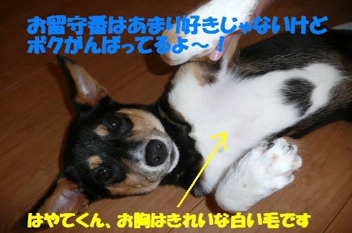 f0121712_17112222.jpg