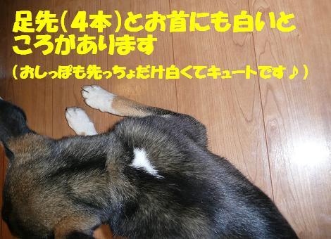 f0121712_17143676.jpg