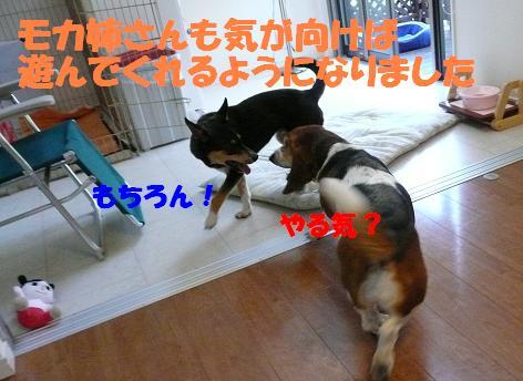 f0121712_1853150.jpg