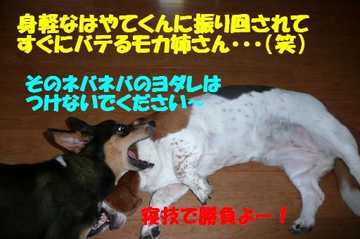 f0121712_1855495.jpg