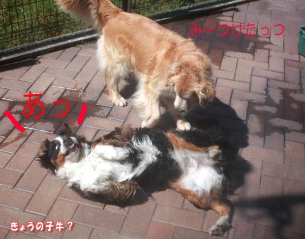 f0203423_10411676.jpg