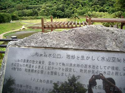 和泉親水公園にて (シラサギとゴイサギ?アオサギ?)_e0097770_1595189.jpg