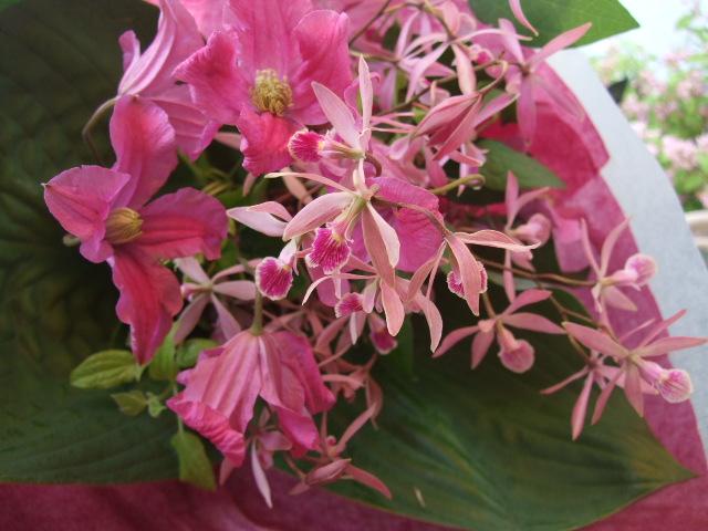オークリーフ(香りの蘭・エンシクリアの花束)_f0049672_11571067.jpg