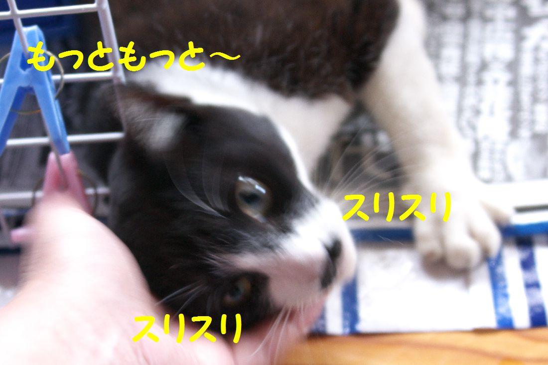 f0197682_1532931.jpg