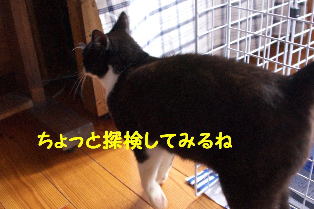 f0197682_1533732.jpg