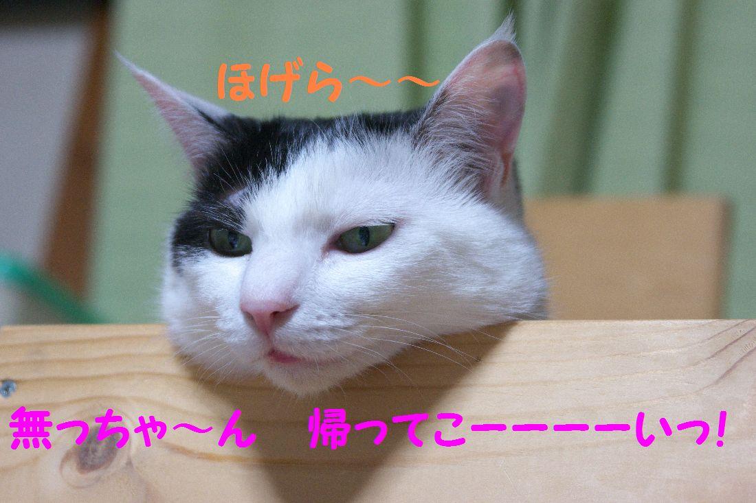 f0197682_1541372.jpg
