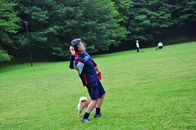 走れ、走れ、かぼちゃん!_a0126590_1121593.jpg