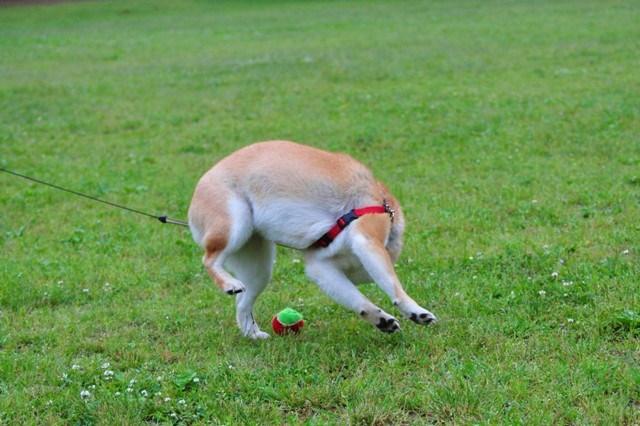 走れ、走れ、かぼちゃん!_a0126590_116274.jpg