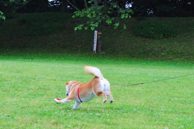 走れ、走れ、かぼちゃん!_a0126590_1163854.jpg