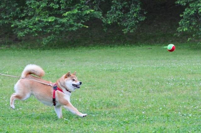 走れ、走れ、かぼちゃん!_a0126590_1172217.jpg