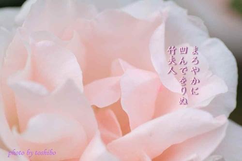 f0053297_1124250.jpg