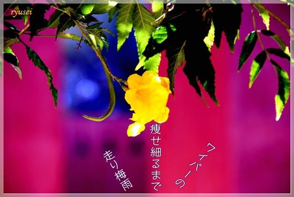 f0053297_1162879.jpg