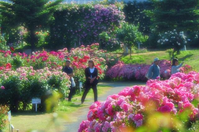 薔薇の花に囲まれて_a0126590_21315831.jpg