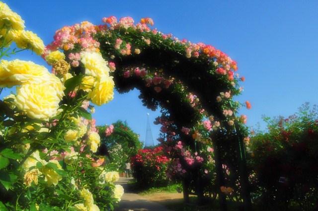 薔薇の花に囲まれて_a0126590_21323110.jpg