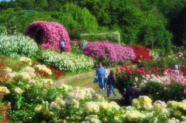 薔薇の花に囲まれて_a0126590_21324791.jpg