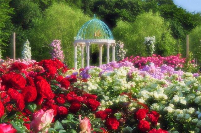 薔薇の花に囲まれて_a0126590_21331761.jpg