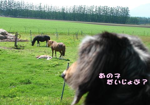 士幌高原行ってみた_f0195891_2181198.jpg