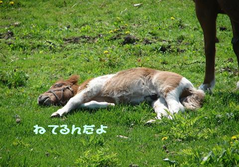 士幌高原行ってみた_f0195891_2183254.jpg