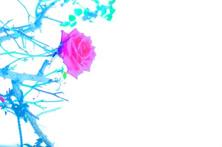b0139407_3335680.jpg