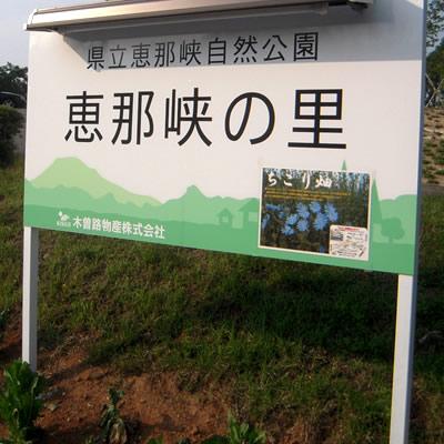 恵那峡でもちこり畑_d0063218_1112610.jpg