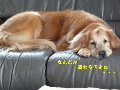f0118135_2148437.jpg