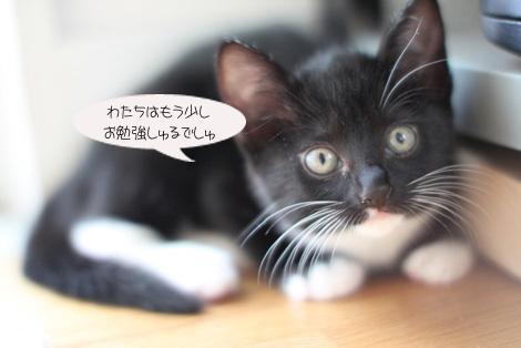 今日のちびニャン_e0151545_21181731.jpg