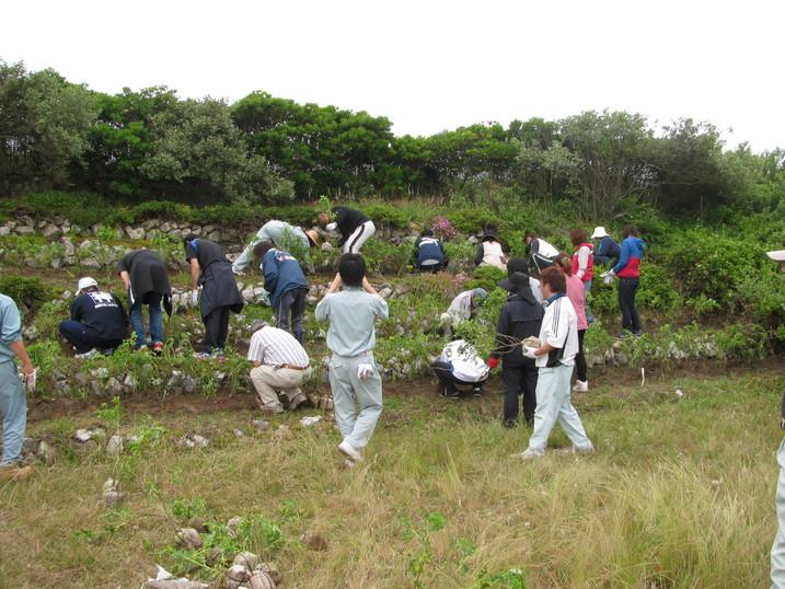 砂丘植物公園にハマナスを植えました_f0229750_9242182.jpg