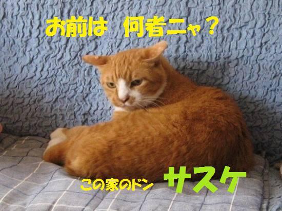 c0202659_122182.jpg