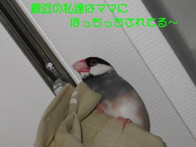 b0158061_21194316.jpg