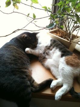 猫と魚_c0082370_221176.jpg