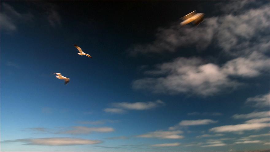 Fly like the wind_c0127403_105438100.jpg