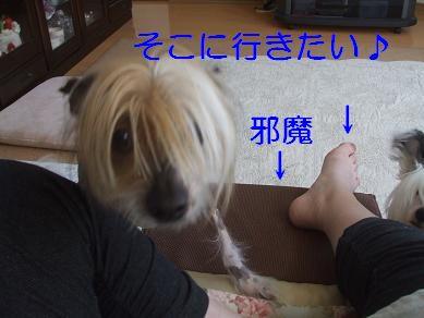 f0179203_8525353.jpg